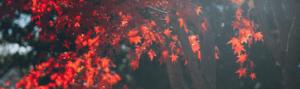 Autumn photo by Jesse Gardner
